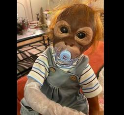 Look Real Newborn Baby Monkey Dolls Reborn Apes Boys with Cl